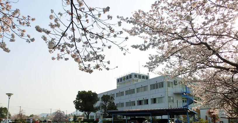 駐車場からの桜